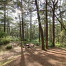 Eco trail at Camp John Hay in Baguio City