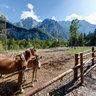 Horses in Logar valley