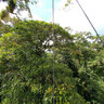 Athica Canopy Arenal trilling adventure