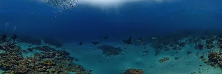 Gauge Pressure further Local Southwest Florida Diving as well Maldives Underwater Maldives Stingrays as well David Hallamore Scorkl 06 07 2017 further Royalty Free Stock Photo Diving Icons Collection Different Related Image33431705. on diving cylinder