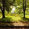 Botanic garden, Kiev, Ukraine