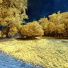 Parque Olhos D'água - Infrared - Eucaliptos
