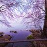 ansa sul fiume Adda a Trezzo
