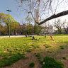 il Vecchio Albero dei Giardini Pubblici