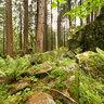 Verde Sottobosco in Valmasino
