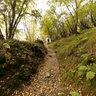 nei boschi della valle Intelvi