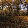 Golden Autumn in the Botanic Garden.