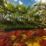 Cao Cristales (Colombia): the most beautiful river