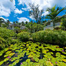 Coral Reef Club lily pond