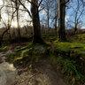 Afon Ogwen near Ogwen banks