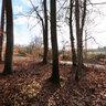 Mittelpunktbayerns Wald