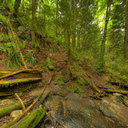 Coal Creek Falls, Cougar Mountain Regional Wildland Park, WA