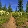 Bear Grass Meadows, Kelly Butte Trail, South Cascades, WA State