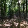 Буковый лес на подъеме к нижнему плато Чатыр-Дага