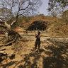 Trees Outside Elephanta Caves