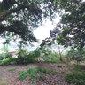 Kuanchang Mega Lychee trees