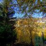 Autumn still life in Spania Dolina (SVK)