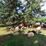 Ovce v Stupave / The Sheeps in Stupava (SVK)