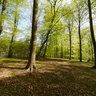 Jaegersborg deer park