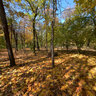 Осенний парк Ессентуки
