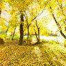 Hobble Creek In Fall