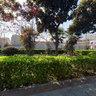 路边花园的树荫2