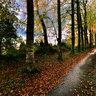 Buchen im Herbst Allee du Bourdonnel Quimper
