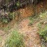 Masgenuine-i Agrotek Batu 15