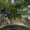 AVL Garden