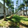 """Palm Tree Street - """"Rua das Palmeiras"""""""