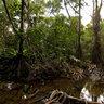 Pandanus Swamp Masoala NP Madagascar