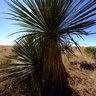 Chihuahuan Desert Vegetation