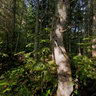 Boreal Forest Quebec