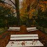Rombergpark Lake Autumn