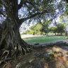 Árvores Centenárias em São Miguel das Missões, RS