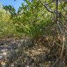 Groovy mangrove