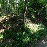 Büsnau Forest