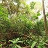Yumbo Dapa Forest