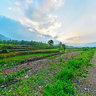 20140602river bank in the morning黟县芦村河畔晨光
