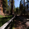 Mariposa grove rd.