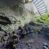 Inside a lava cave