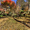 Autumn in Mt Wilson - The Blue Mountains ... Panorama 1 of 4