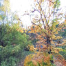 Ricoh THETA shot - Maple Grove, Hoyt Arboretum, Image 01
