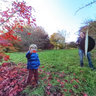 Ricoh THETA shot, Maple Grove, Hoyt Arboretum, Autumn Image 04