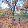 Ricoh THETA shot, Maple Grove, Hoyt Arboretum, Autumn Image 05