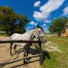 Kamenjar, Novi Sad - Horse