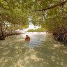 Tunel de manglares en Cayo Muerto, Edo. Falcón, Venezuela