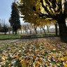 Mondego Green Park