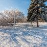 Зимняя аллея Комсомольского парка