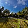 Umabian Taman Sari Ricefields (again!)